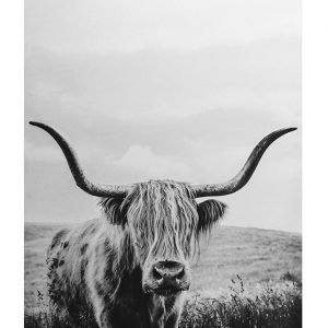 E533026 300x300 - The YAK - Black & White Canvas