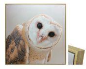 E533032 177x142 - Ozzie Owl Print