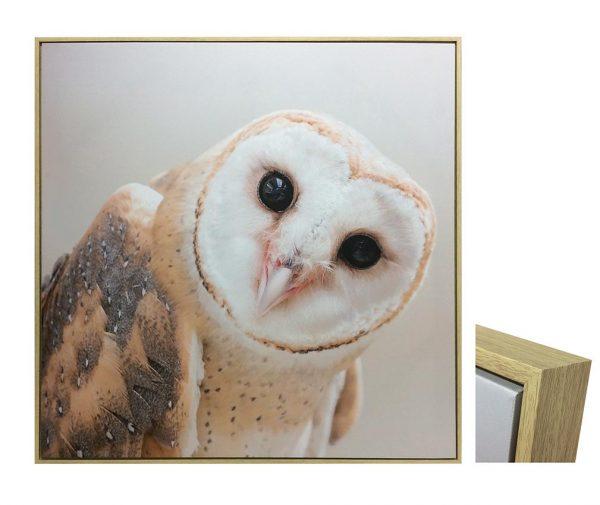 E533032 600x505 - Ozzie Owl Print