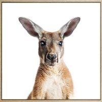 E533133 - Skippy Kangaroo Print