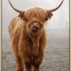HF6674 300x300 - Framed Scottish Highland Cow Print