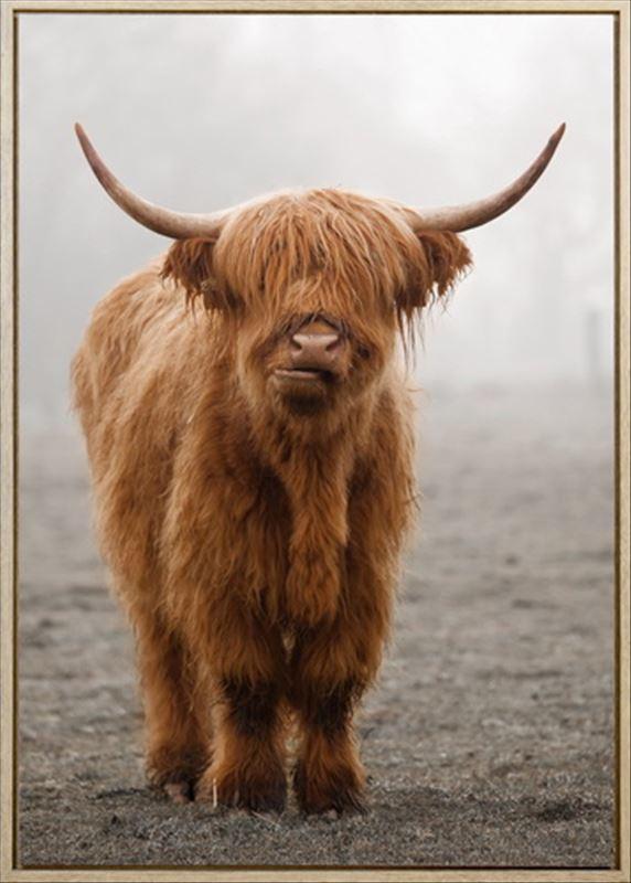 HF6674 - Framed Scottish Highland Cow Print