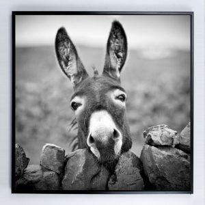 E533126 300x300 - Donkey Print