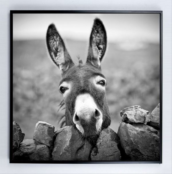 E533126 600x607 - Donkey Print