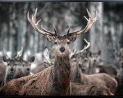 E533134 177x142 - Deer Me Print