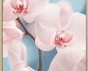 E533144 177x142 - Only Orchids Print
