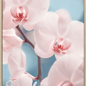 E533144 300x300 - Only Orchids Print