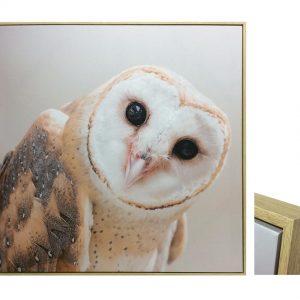 E533032 300x300 - Ozzie Owl Print