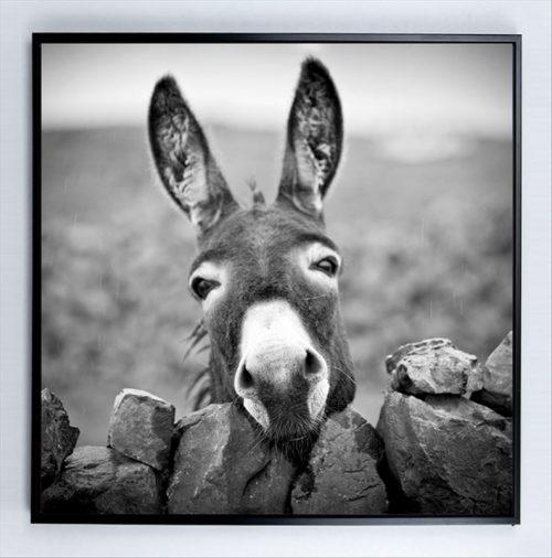 Donkey 500x506 - Donkey Print