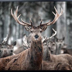 E533134 300x300 - Deer Me Print