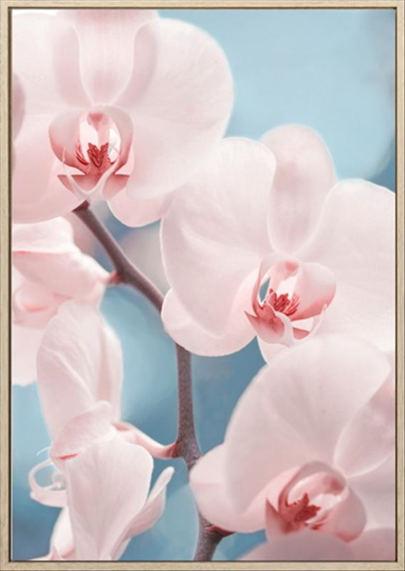 E533144 - Only Orchids Print