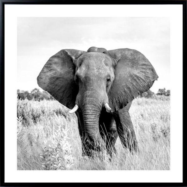 ELEPHANT 600x600 - Elephant Print