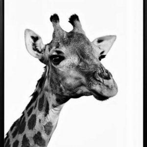 Giraffe 300x300 - Giraffe Print