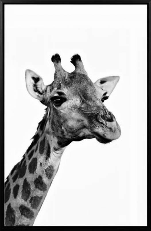 Giraffe - Giraffe Print