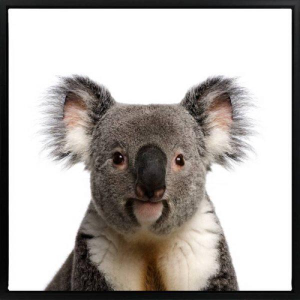 Koala 600x600 - Koala Print