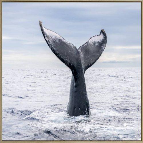 E533340 500x500 - Whale Tail Print