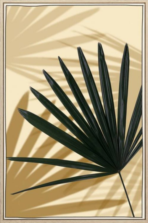 Feather Palm 500x752 - Feather Palm Print