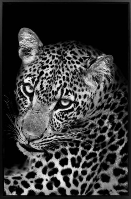 Leopard 500x760 - Leopard Print